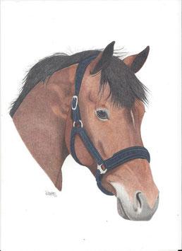 Paard in kleurpotlood