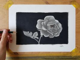 Wilde roos in grafiet en houtskool