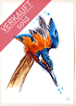 EISVOGEL | kingfisher | A4