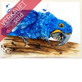 HYAZINTH-ARA | hyacinth macaw | A4