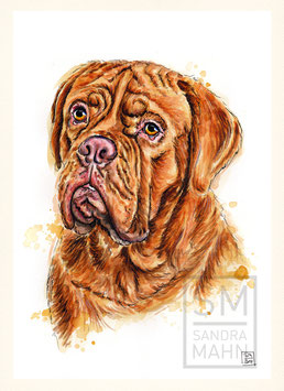 BORDEAUXDOGGE | french mastiff | A4