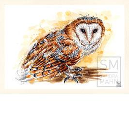 SCHLEIEREULE | barn owl | A4