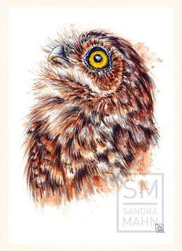 KANINCHENKAUZ | burrowing owl | A4