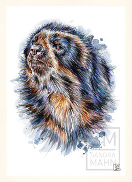 BRILLENBÄR | spectacled bear | A4