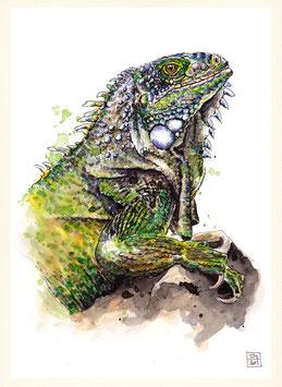 LEGUAN | iguana | A4