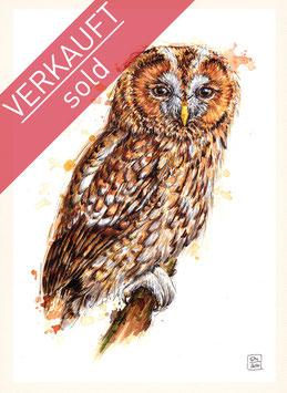 WALDKAUZ | tawny owl | A4