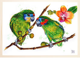 MASKENZWERGPAPAGEIEN | double-eyed fig parrots | A4