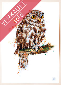 STEINKAUZ | little owl | A4