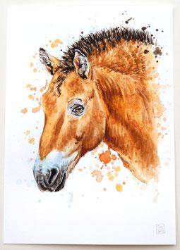 PRZEWALSKI-PFERD | przewalski's horse | A4