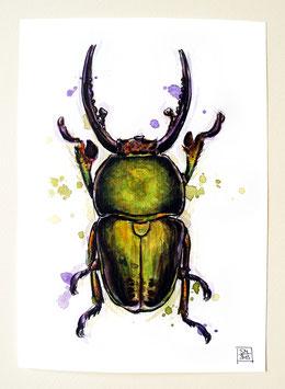HIRSCHKÄFER | stag beetle | A5