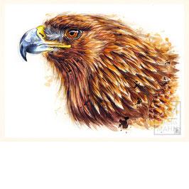 ADLER | eagle | 30x40