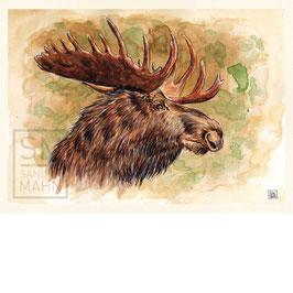 ELCH | moose | A4