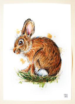KANINCHEN | rabbit | A4