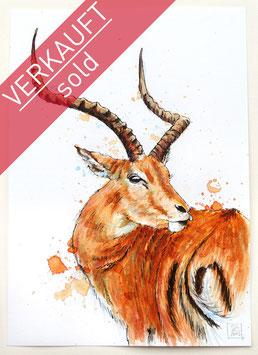 ANTILOPE | antelope | A4