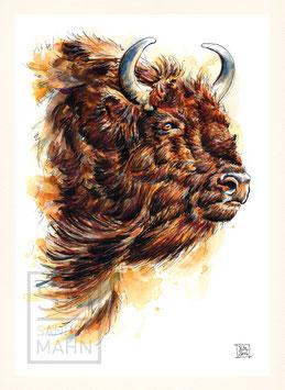 BÜFFEL | buffalo | A4