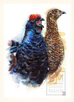 BIRKHUHN | black grouse | A4