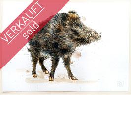WILDSCHWEIN | wild boar | A4