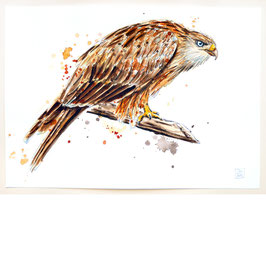 ROTMILAN | red kite | A4