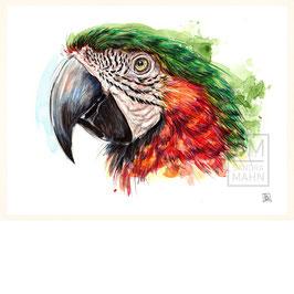 ARA | macaw | 30x40