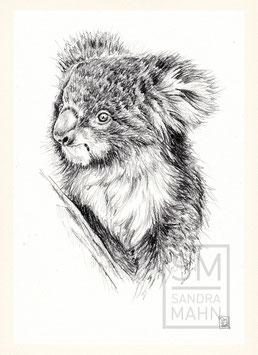 KOALABÄR | koala | A4
