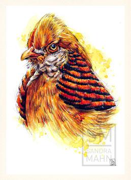 GOLDFASAN | golden pheasant | A4