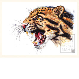 NEBELPARDER | clouded leopard | A4