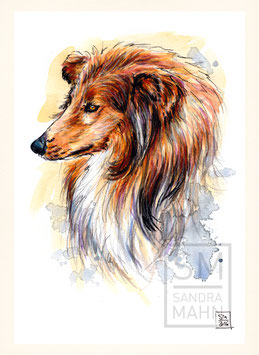 LANGHAARCOLLIE | rough collie | A5