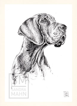 DEUTSCHE DOGGE | great dane | A5