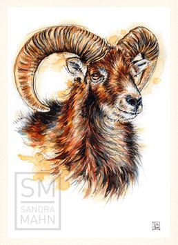 MUFFLON | mouflon | A4