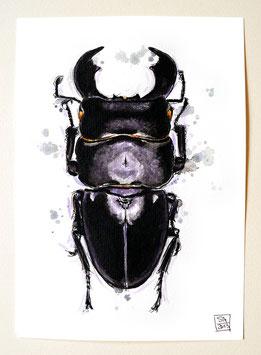 PANZERKOPFKÄFER | stag beetle | A5