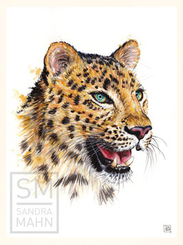 LEOPARD | leopard | 30x40
