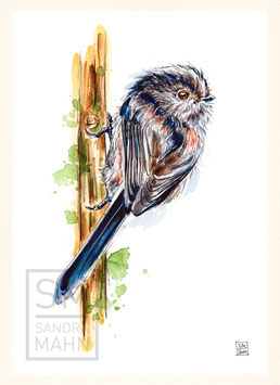 SCHWANZMEISE | long-tailed tit | A4