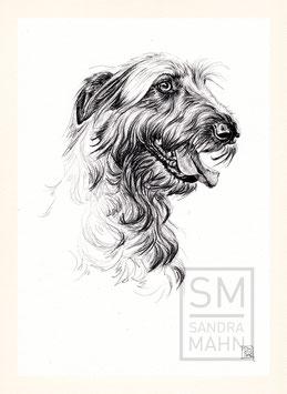 IRISCHER WOLFSHUND | irish wolfhound | A4