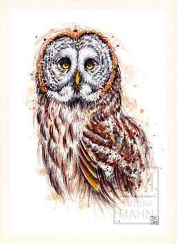 BARTKAUZ | grey owl | A4