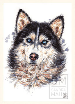 HUSKY | husky | A4