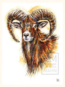 MUFFLON | mouflon | 30x40