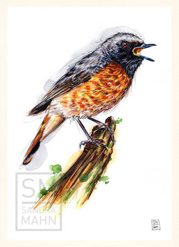 GARTENROTSCHWANZ | common redstart | A4