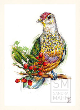 FRUCHTTAUBE | fruit dove | A4