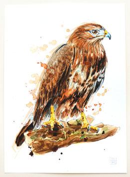 FALKE | falcon | A4