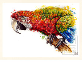 HELLROTER ARA | scarlet macaw | A4