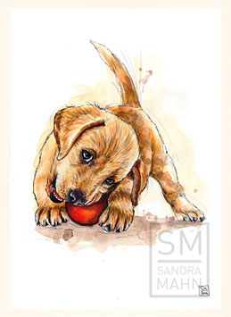 LABRADOR RETRIEVER | labrador retriever | A4