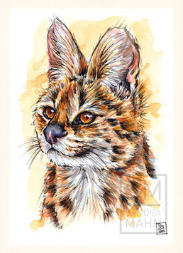 SERVAL | serval | A5