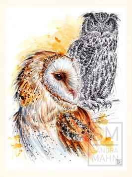 SCHLEIEREULE & UHU | barn owl & eagle-owl | 30x40