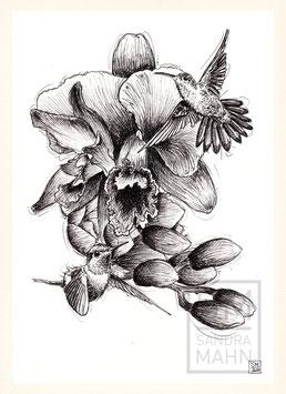 KOLIBRI | hummingbird | A4