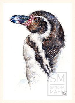 HUMBOLDT-PINGUIN | humboldt penguin | A4