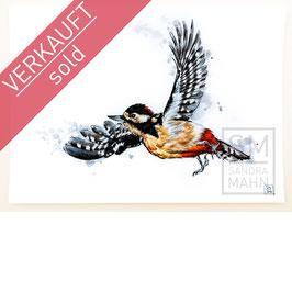 BUNTSPECHT | woodpecker | A4
