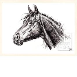 PFERD | horse | A4