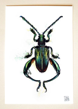 BLATTKÄFER | leaf beetle | A5