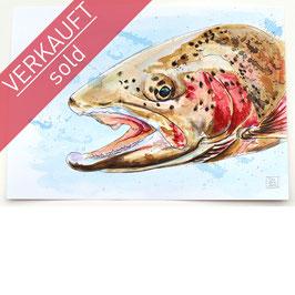 REGENBOGENFORELLE | rainbow trout | A4