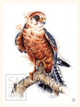 FALKE | falcon | 30x40